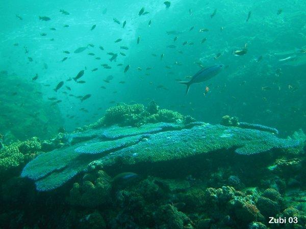 Podvodni cudesni svet - Page 3 Corals2