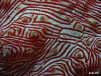 Sea cucumber skin (Thelenota