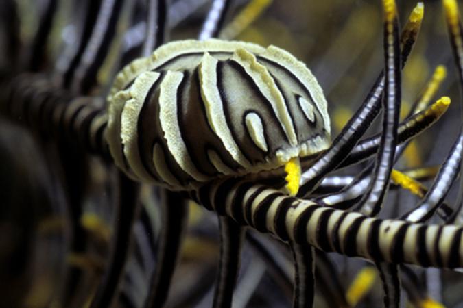 Foto Würmer Würmer