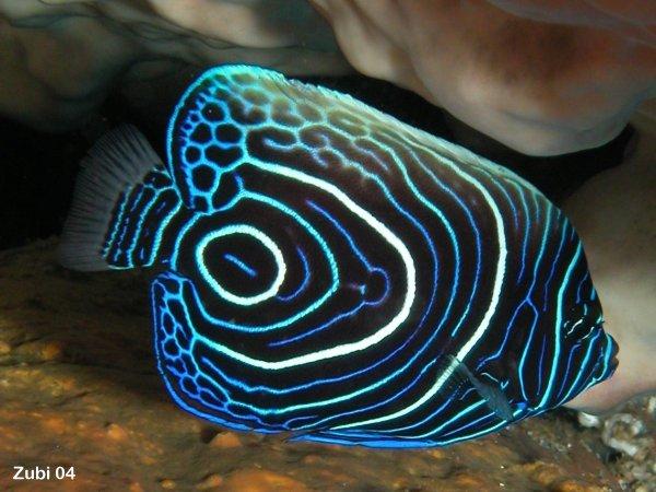 Zubi\'s Korallenriff: STICHWOERTER nach ABC (starfish)
