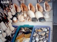 Shells for sale