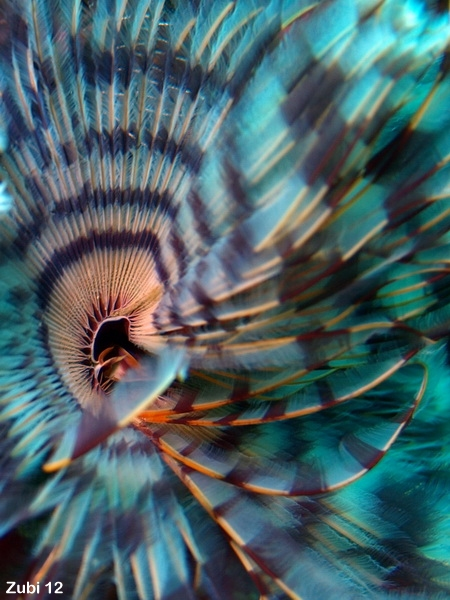Ambon Moluccas Indonesia Starfish Photos Unterwasser