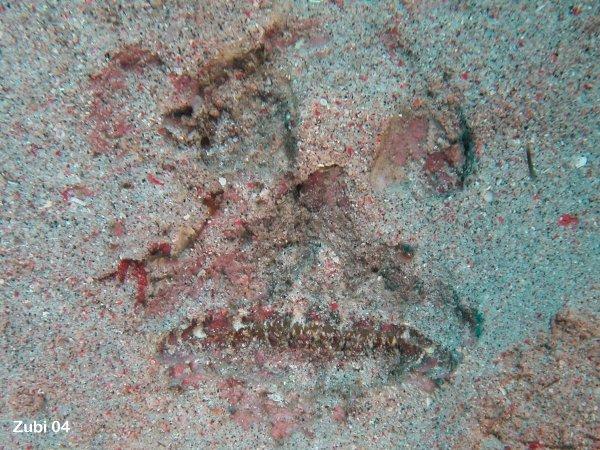 steinfisch vorkommen